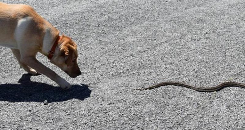 Что делать, если животное укусила пчела или змея?   Артемида - ветеринарная  клиника во Владимире с 25-летней историей