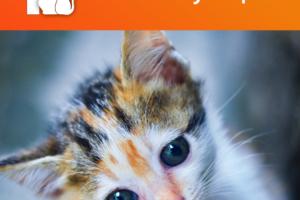 Подобрали котенка: что делать дальше?