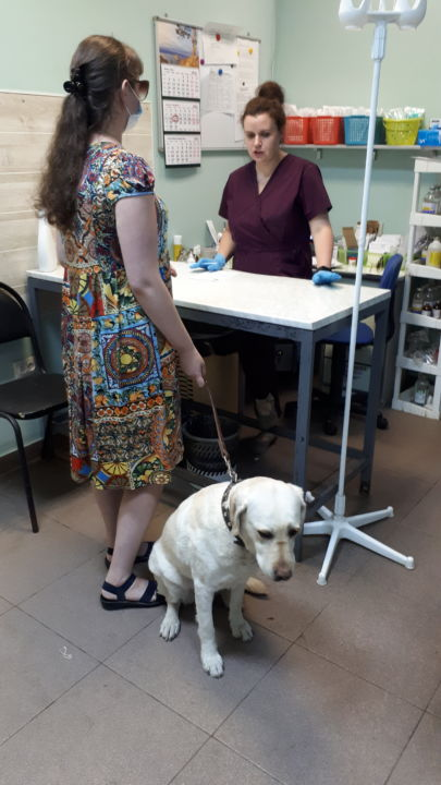 Собака-проводник на приеме у врача